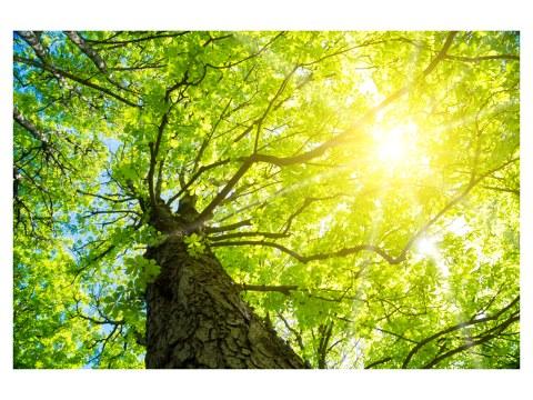 Baum Sonnenstrahlen