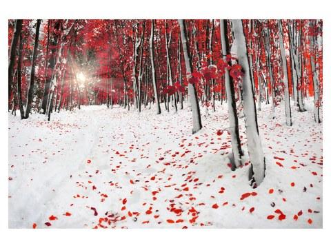 Birkenwald Bilder