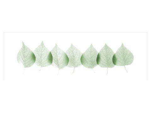 Blätter Bilder