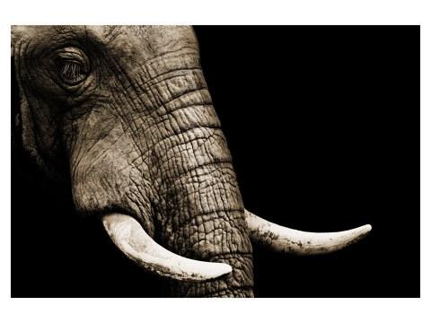 Elefanten-Bild