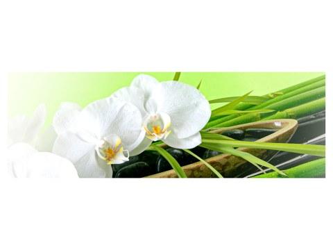 Orchideen Poster